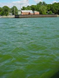 Fleurs D Eau De Cyanobacteries Lacs Reservoirs Et Cours D Eau