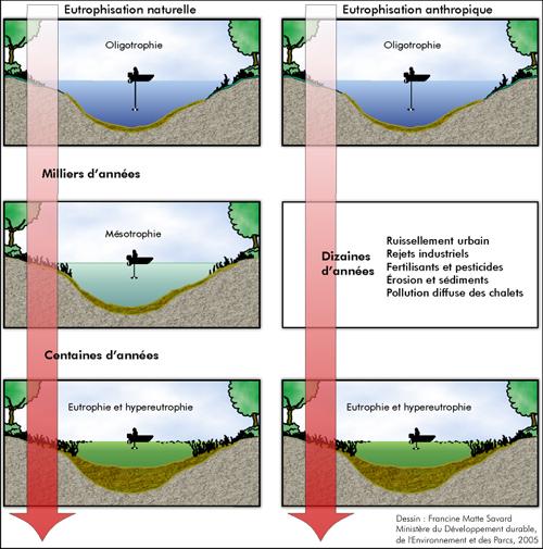 Le processus d'eutrophisation des lacs