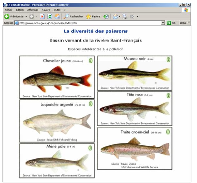 Découvre quelques conséquences de la pollution sur les poissons