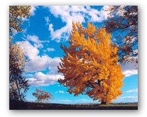 planter un arbre pour sauver l environnement les bienfaits de l arbre sur l environnement. Black Bedroom Furniture Sets. Home Design Ideas