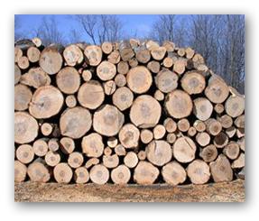 Planter un arbre pour sauver l environnement les bienfaits de l arbre sur l environnement - Arbre fruitier comme bois de chauffage ...